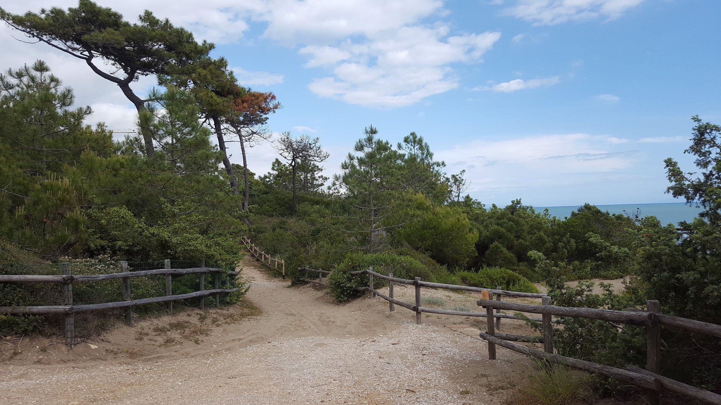 Luigi Greco Architetto - La Casa della Cicala - art in nature - Ambienta 2016 - Roccamare - Castiglione della Pescaia - arte naturale 1.jpg