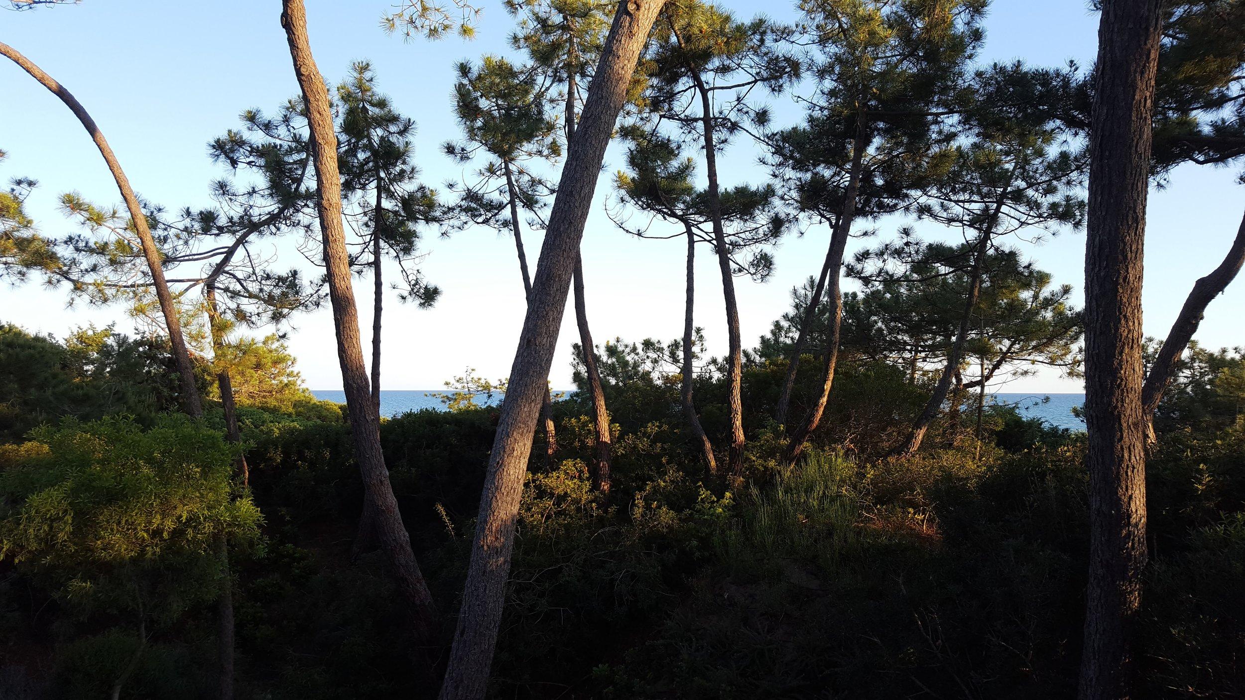 Luigi Greco Architetto - La Casa della Cicala - art in nature - Ambienta 2016 - Roccamare - Castiglione della Pescaia - arte naturale 4.jpg