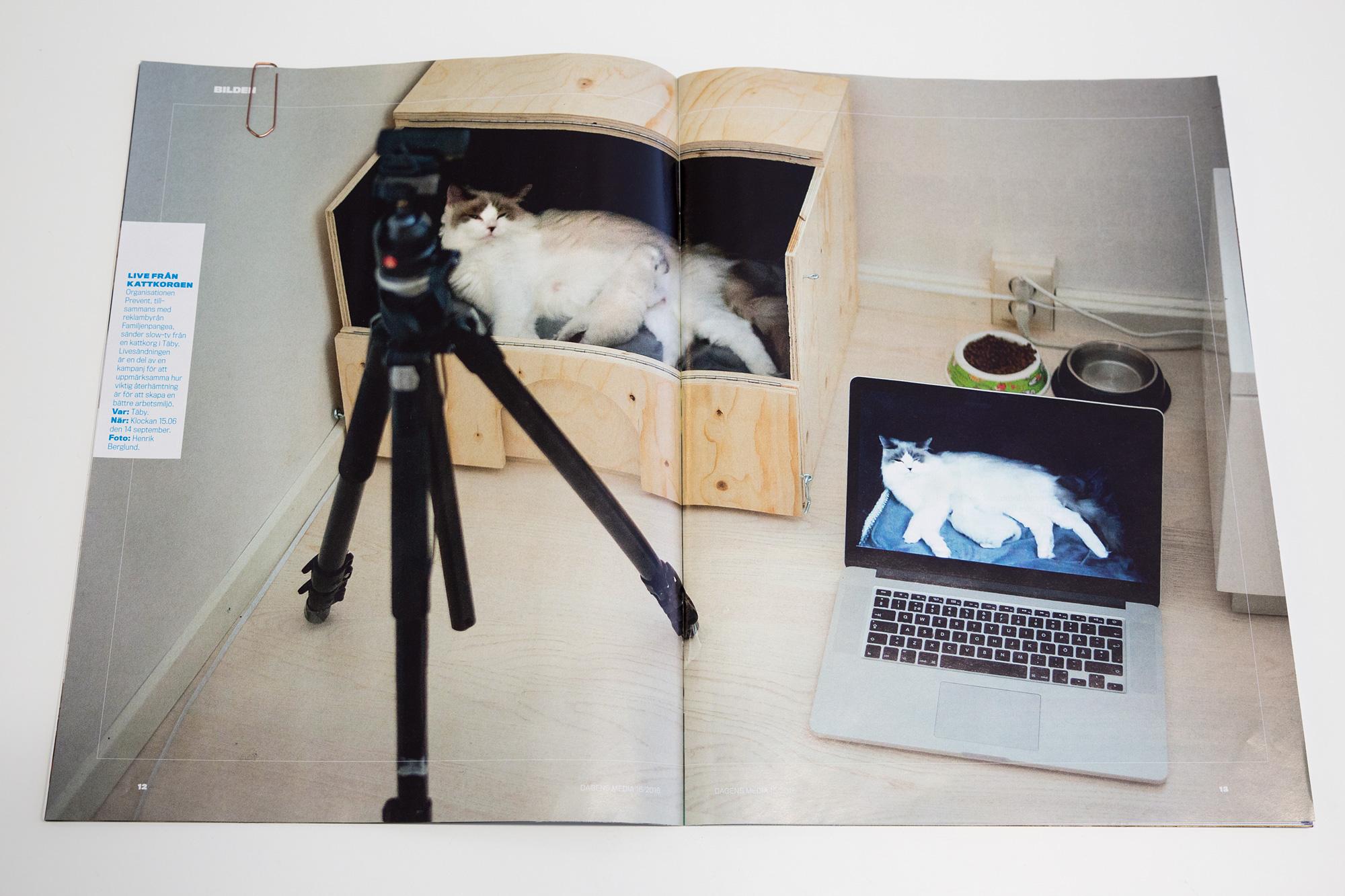 Slow-tv! Återhämtning med hjälp av avstressande kattunge. Kampanj för  Prevent . Bild från reportage i Dagens media.
