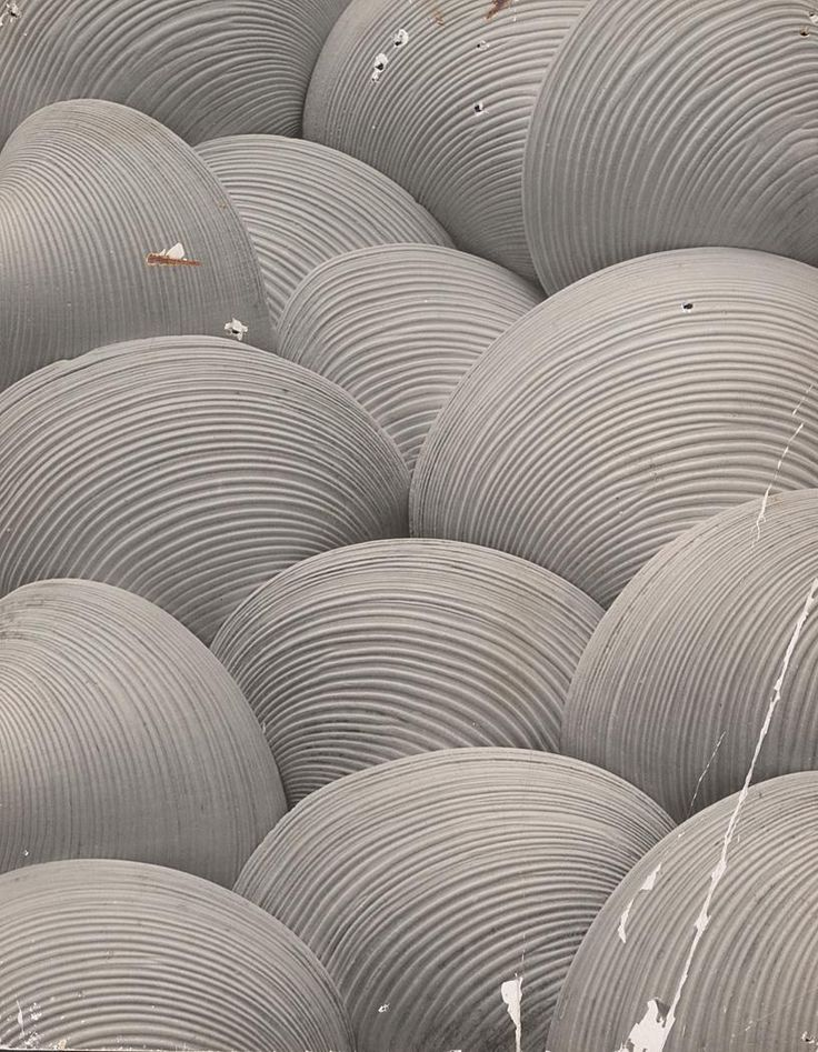 Clam Shells, 1931