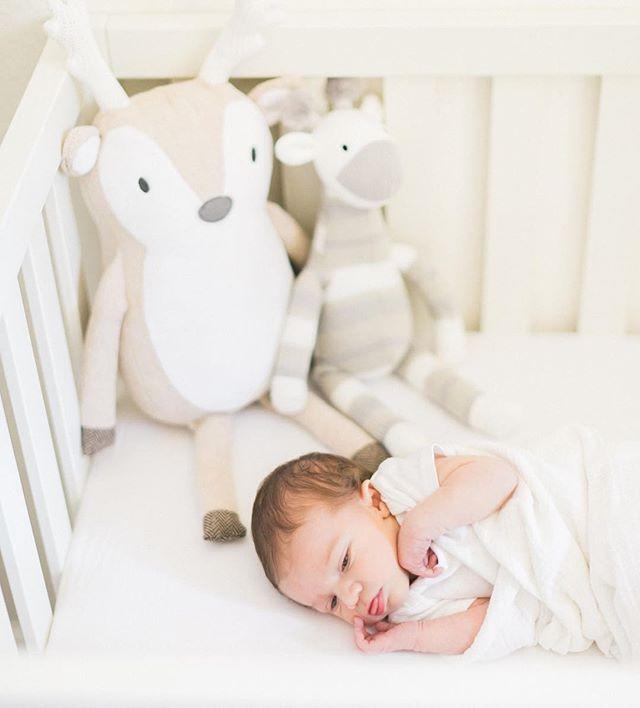 Snug as a bug in a rug 🌿 #amiragraynewborns #delmarnewbornphotographer #lajollanewbornphotographer