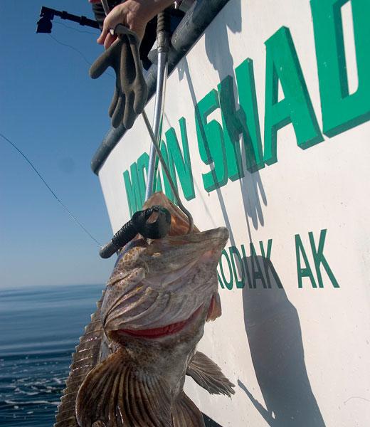 fishing6a.jpg