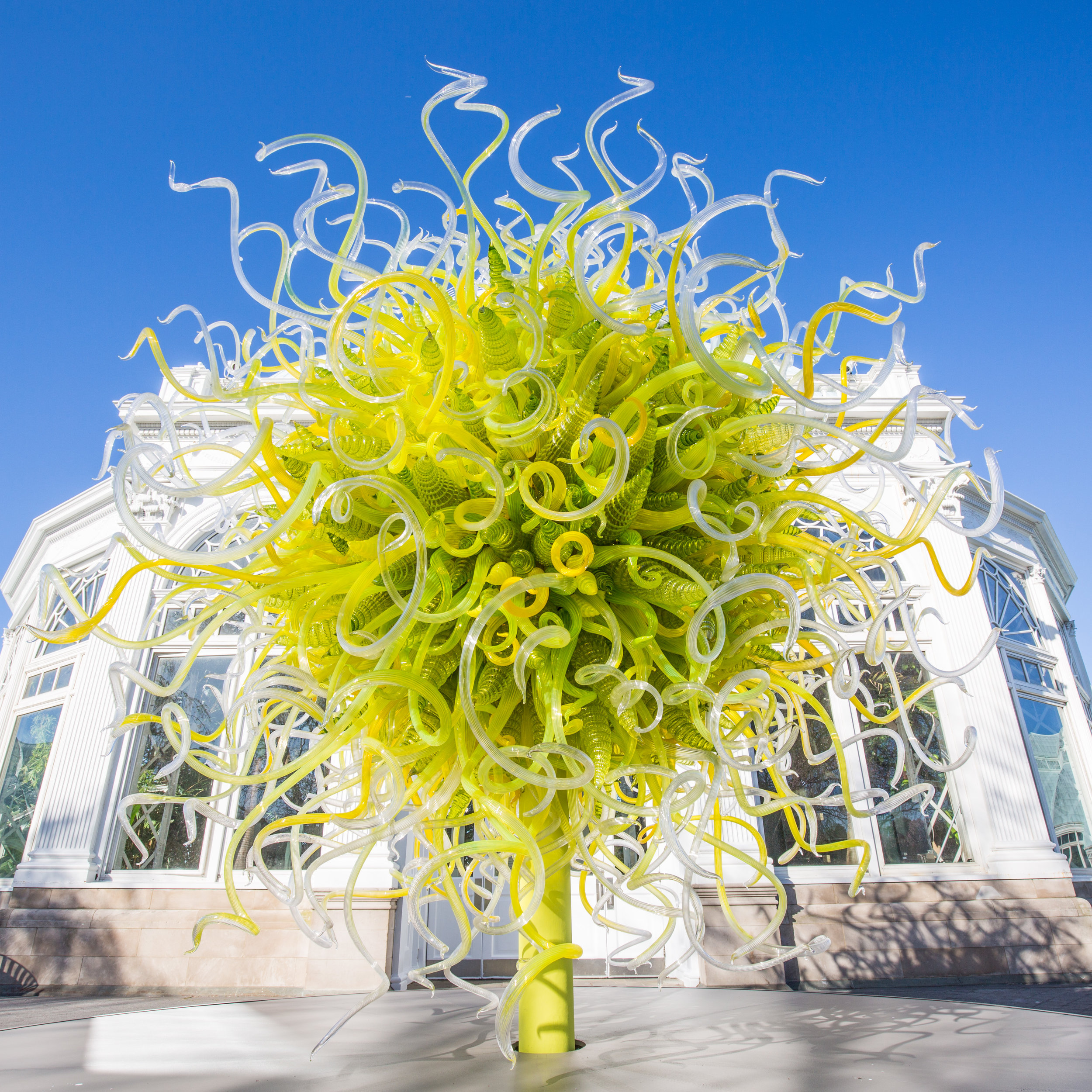 Sol de Citrón  by Dale Chihuly at the NYGB (2017)