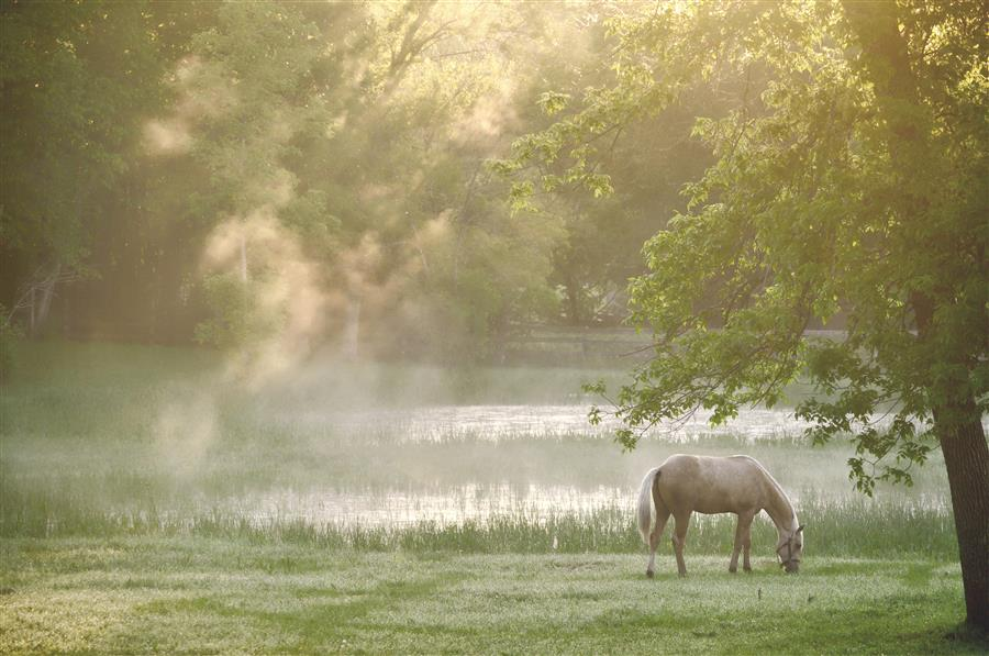 Morning Mist  by Emily Kent, photography