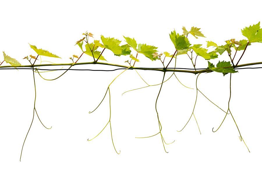 Wine  by Tan Kadam, photography