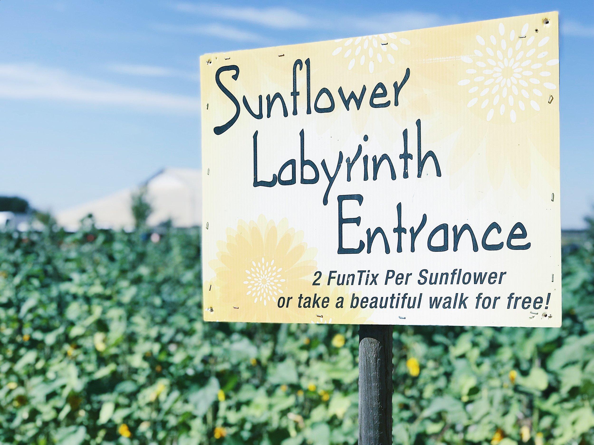 sunflower labyrinth.jpg