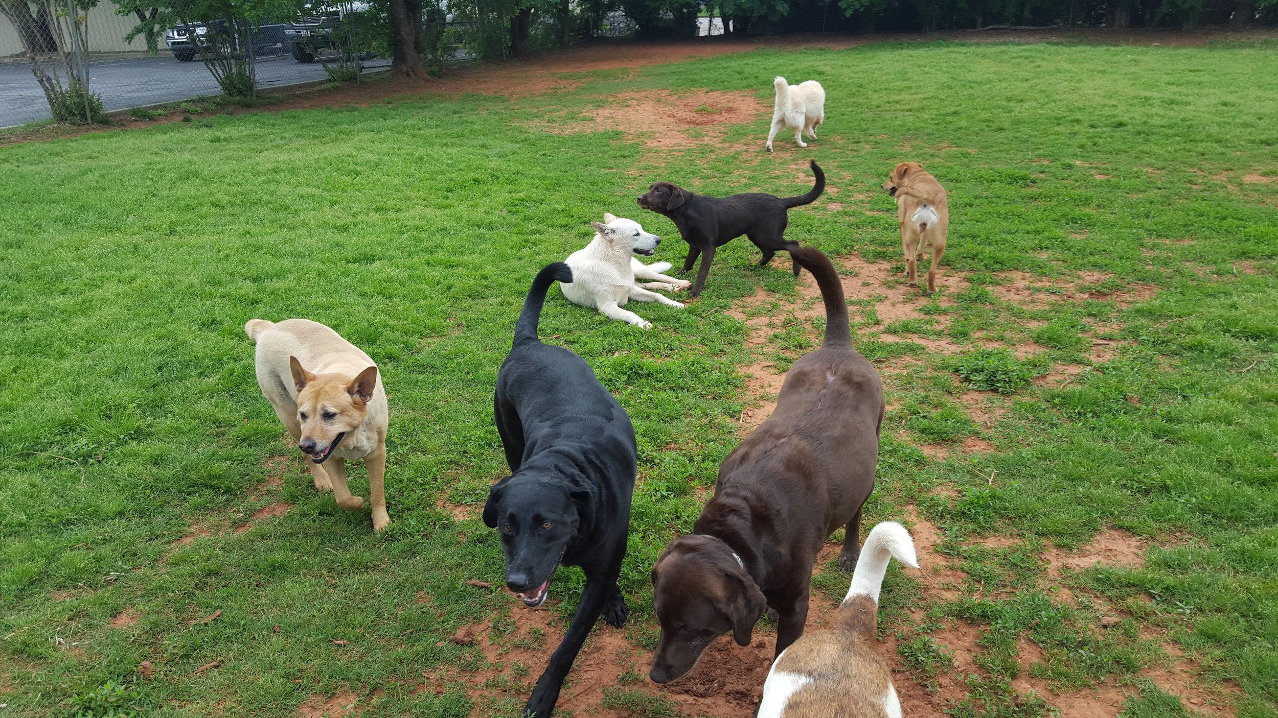 Big Dogs July 2016 (2).jpg