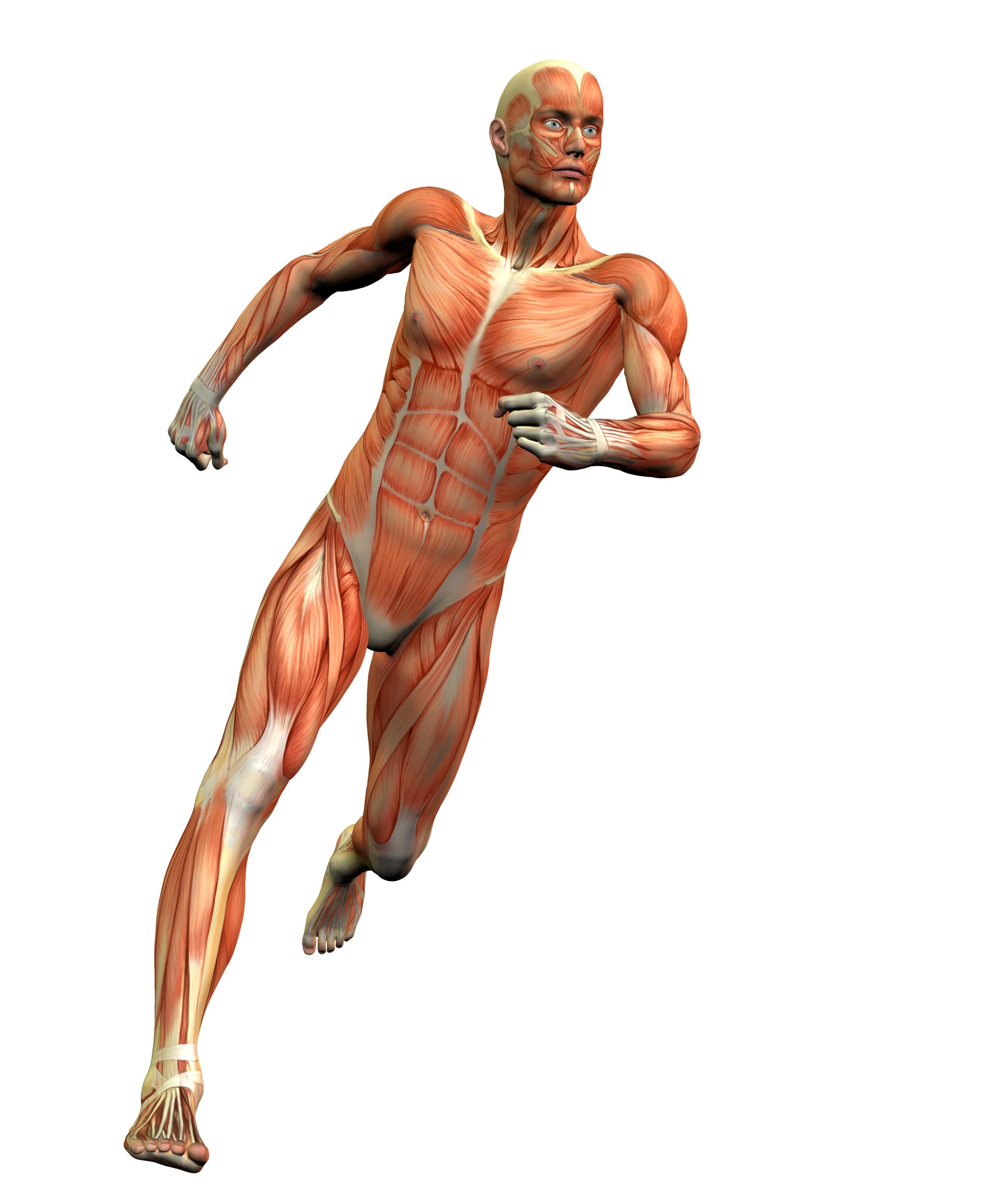 Male-Anatomy-Figure-Running-159521438.jpg