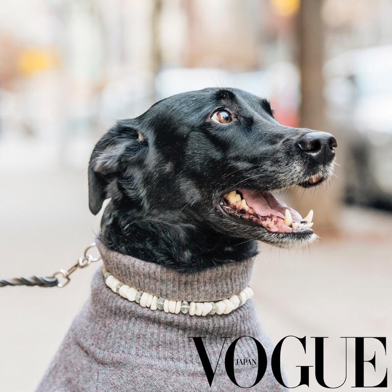 Vogue Japan _Pet Joaillerie JPG