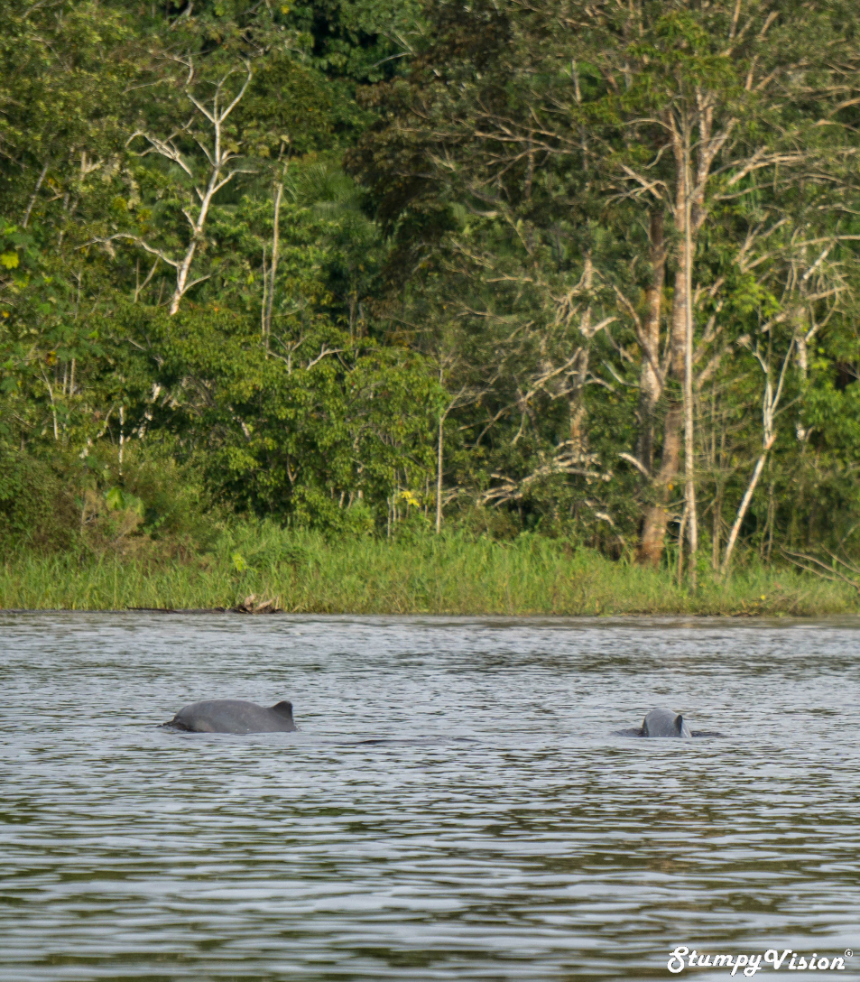 Pink Dolphins Puerto Narino Leticia Amazon Colombia Travel Blog 13.jpg