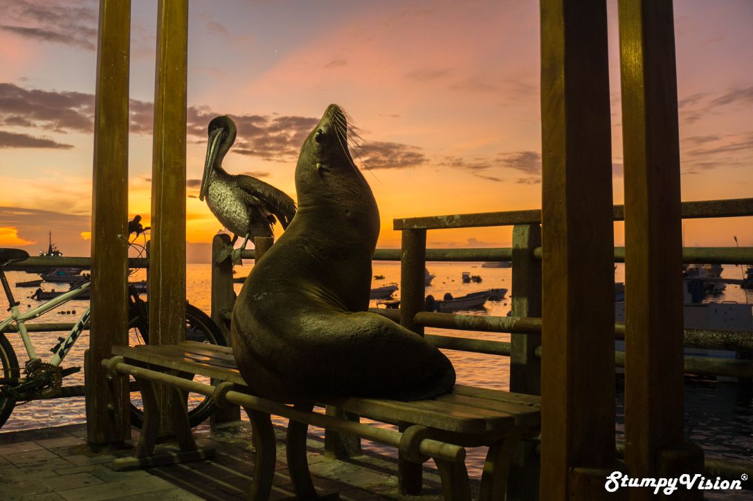It is truly breathtaking the completely untouched natural beauty that exists in the Galapagos. Where else in the world can a Pelican and a Sea Lion enjoy the sun set together on a park bench next to a bicycle? Hang-on...wait a minute...