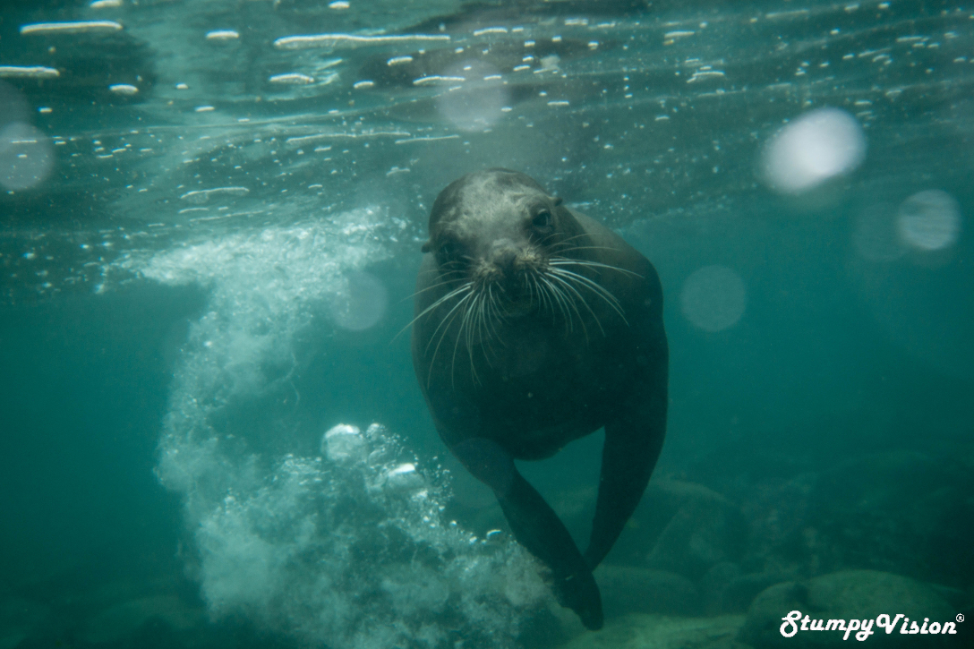 Um so this is like the most onimous looking seal I have ever seen, gulp.