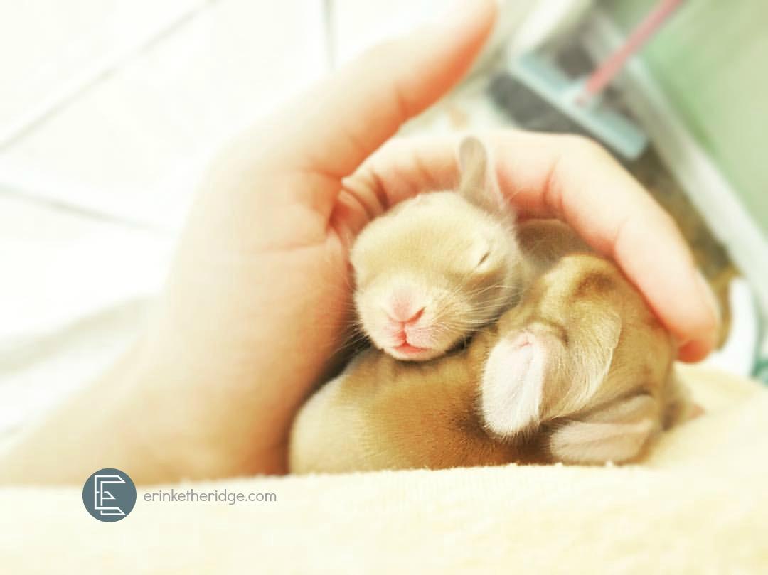 golden-baby-bunnies