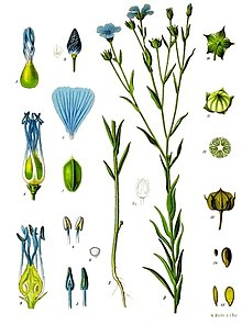 Different parts of the Flax plant