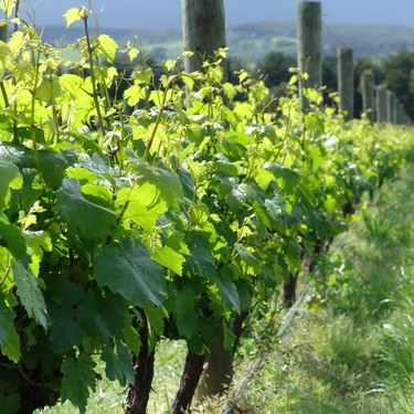 Wineries -