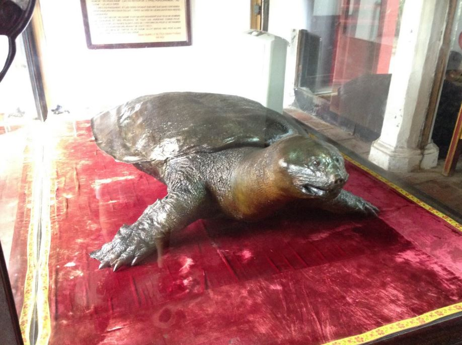 one of the last of the legendary turtles