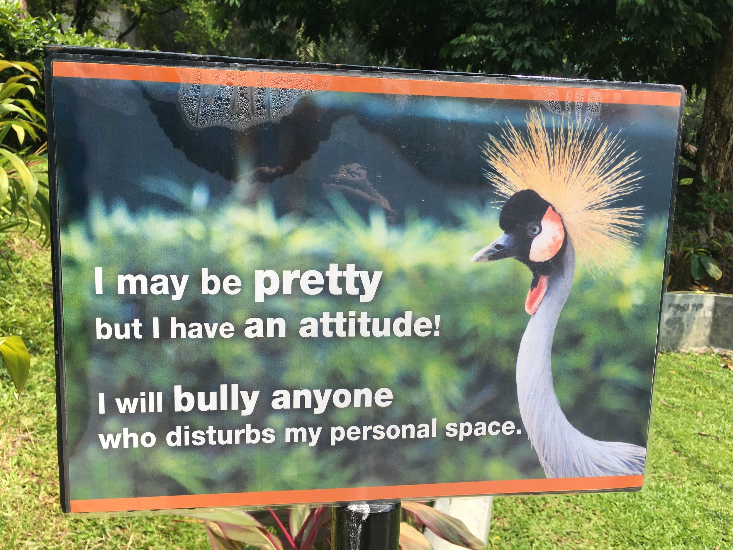 watch out for grumpy birds!