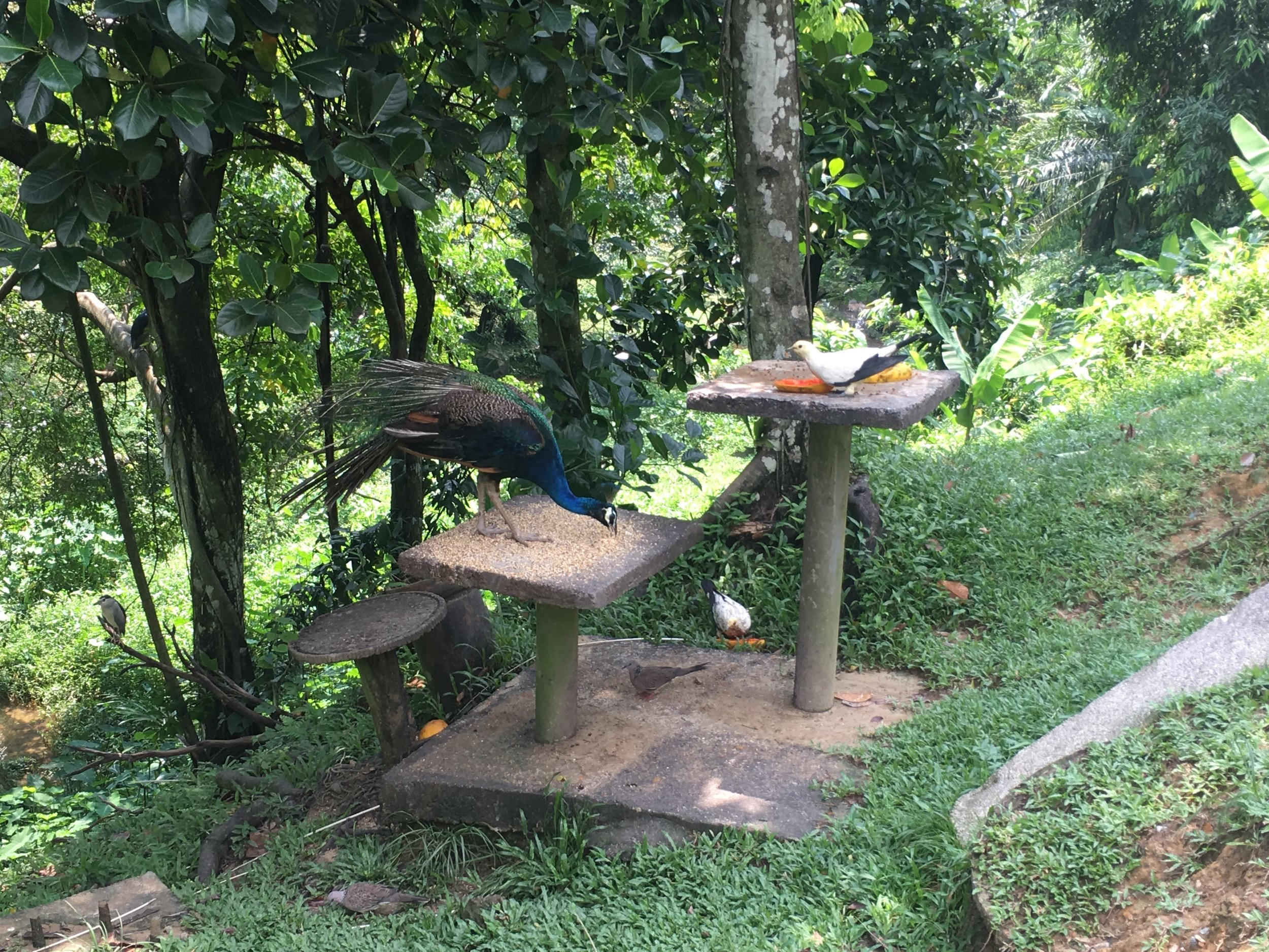feeding stations are set up throughout the bird park so that visitors can see many different birds