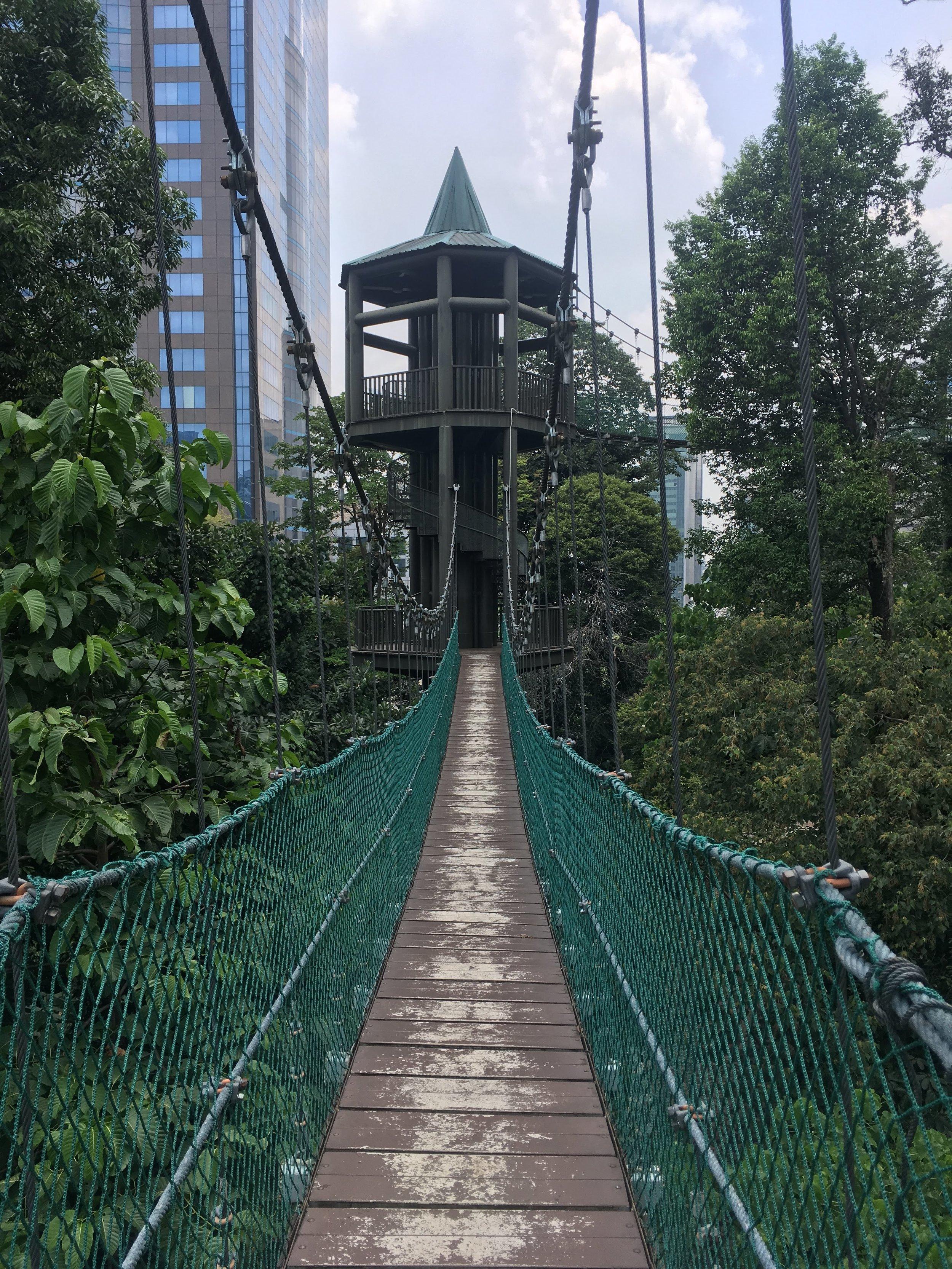 Eco Forest Park Bukit Nanas Canopy Walk
