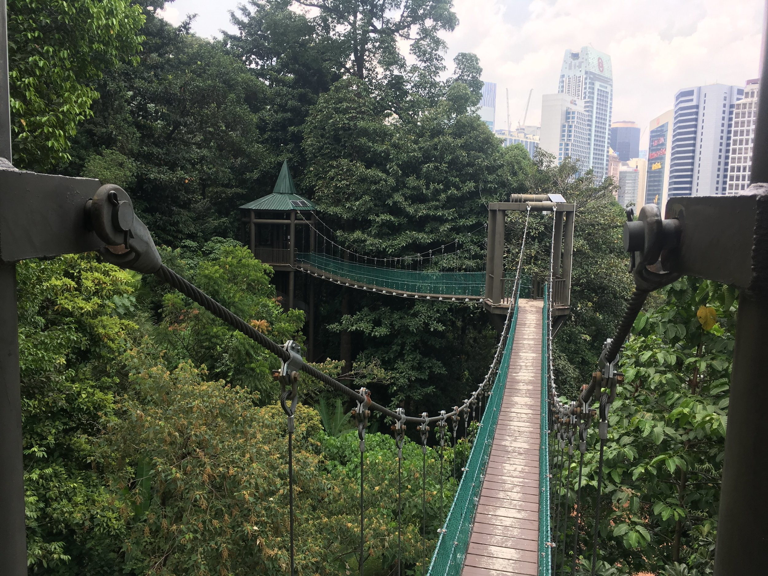 the Canopy Walk is a series of towers and connected bridges