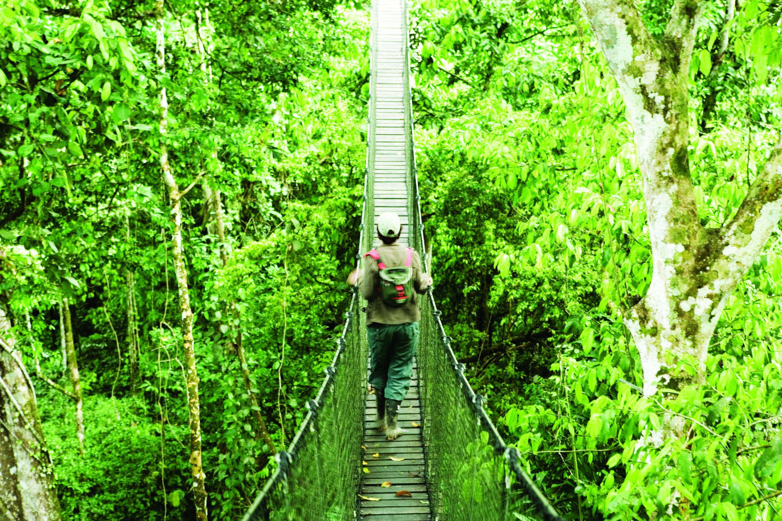 """Résultat de recherche d'images pour """"The rainforest of Tahuamanu, Peru"""""""