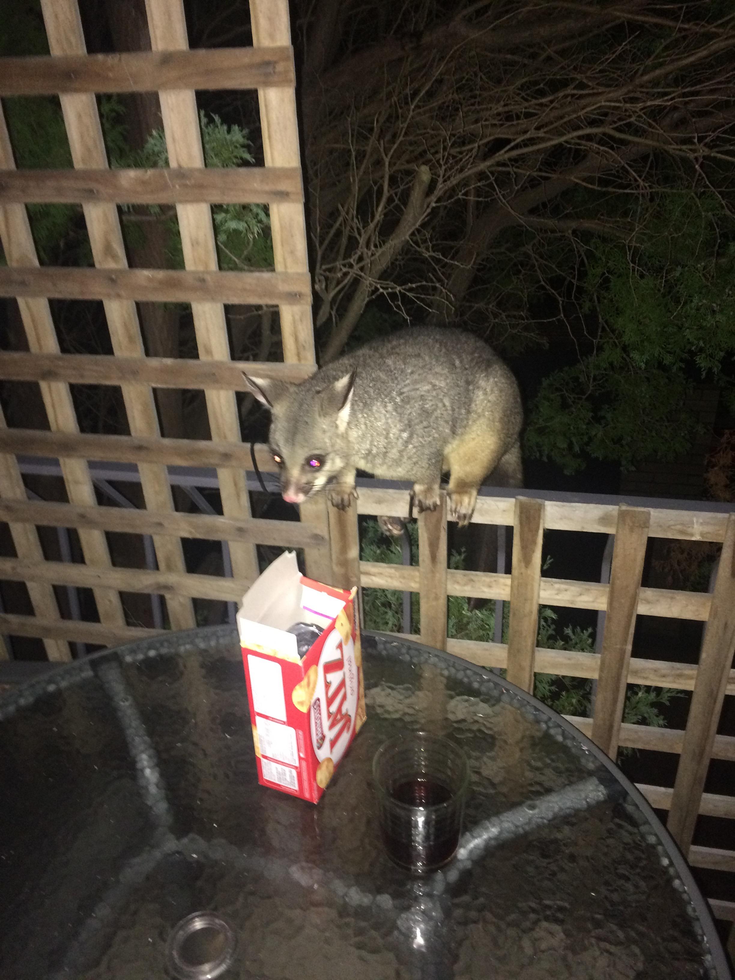George the Possum