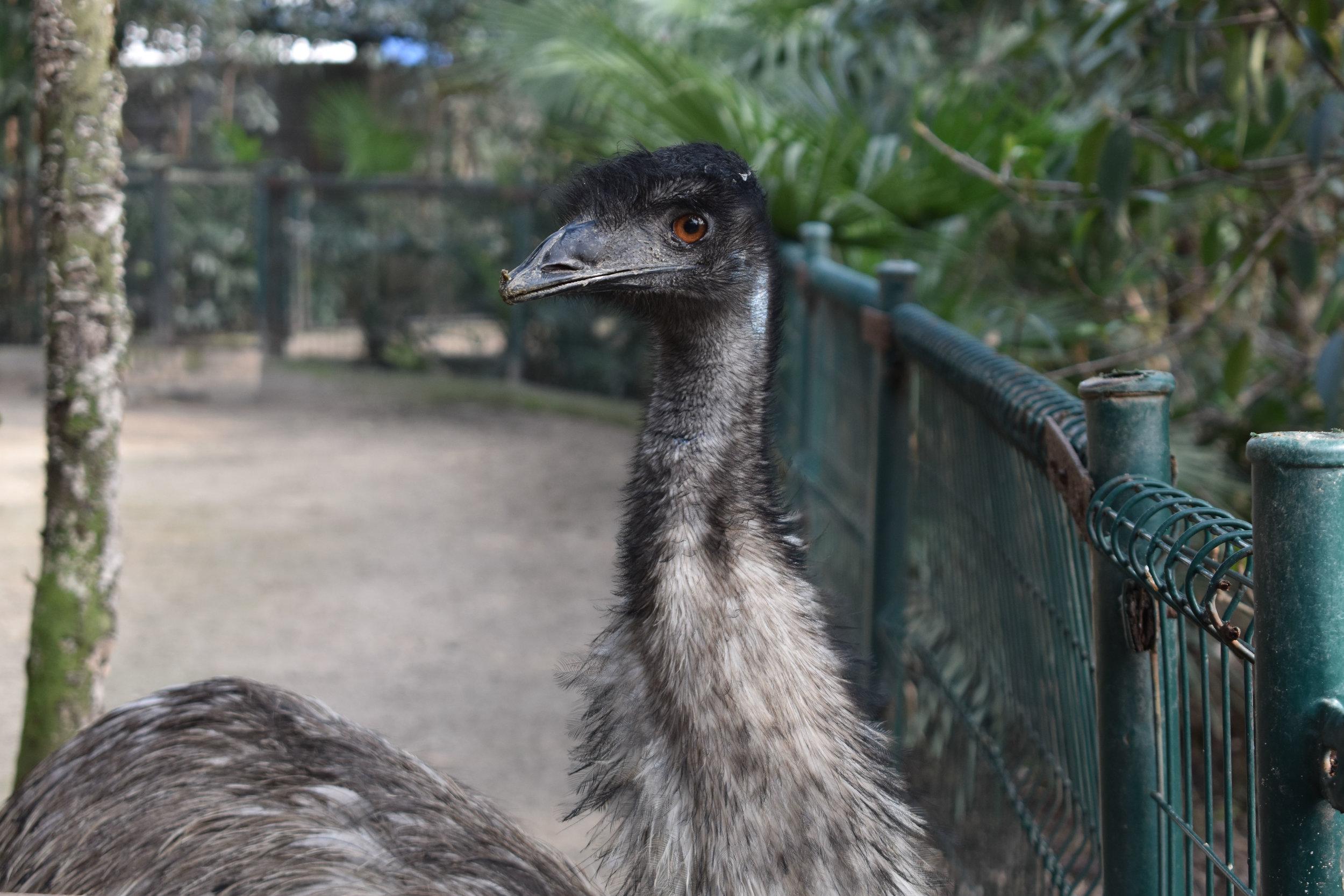 Emu Says What?