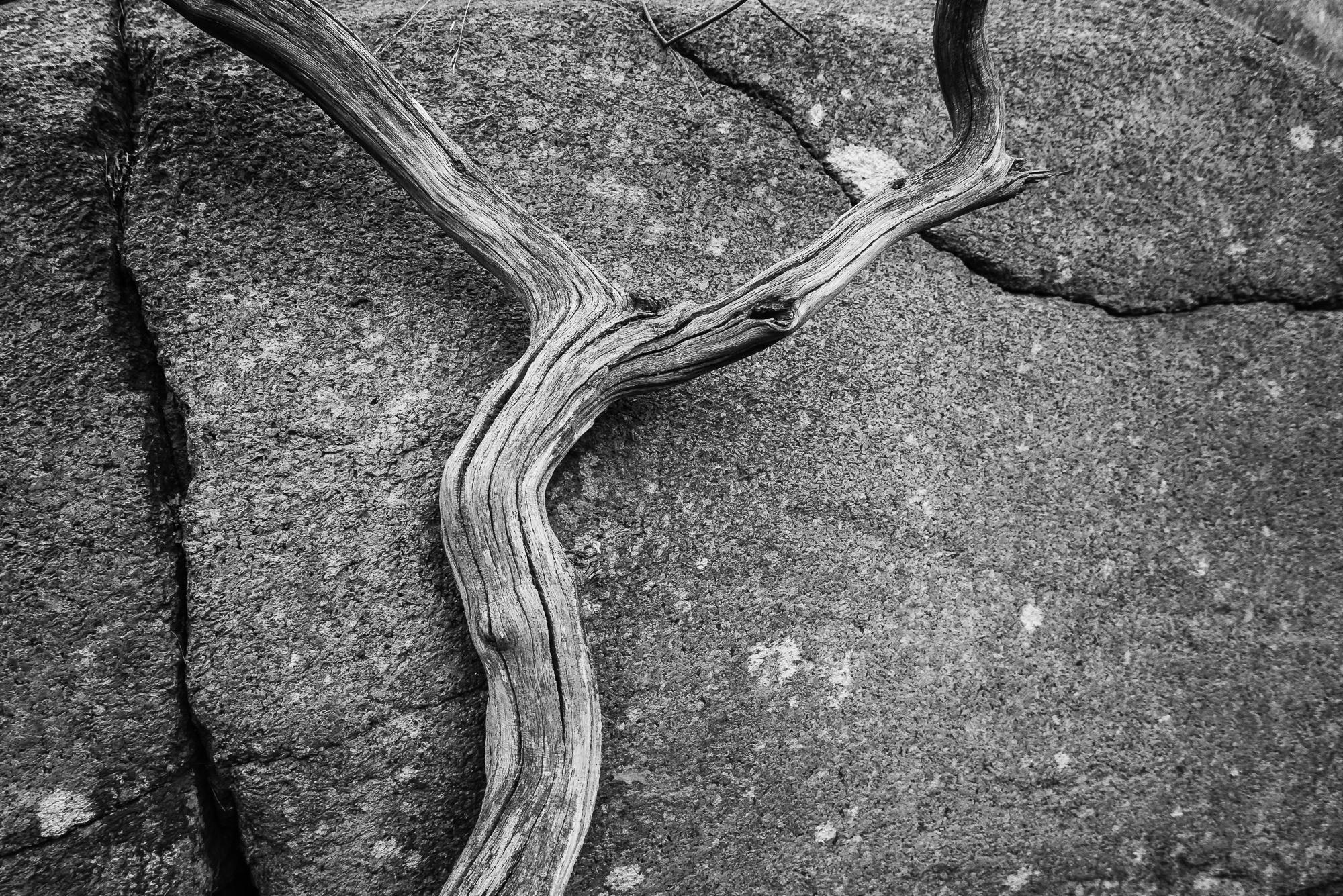 Yxney, Sandefjord-_DSC0049-Bjørn Joachimsen.jpg