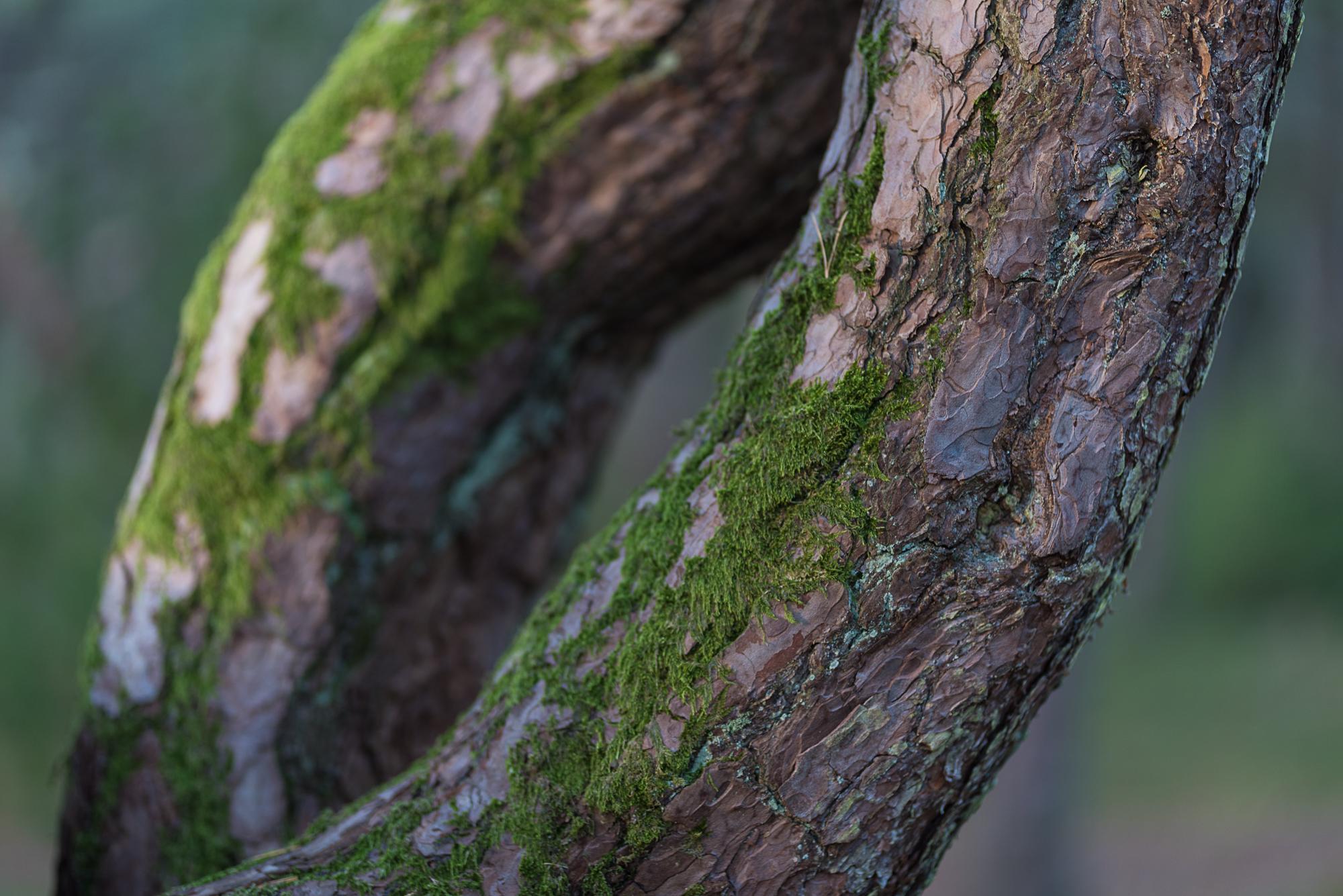 Høst i Prestegårdsskogen--DSC_2924-©Bjørn Joachimsen.jpg