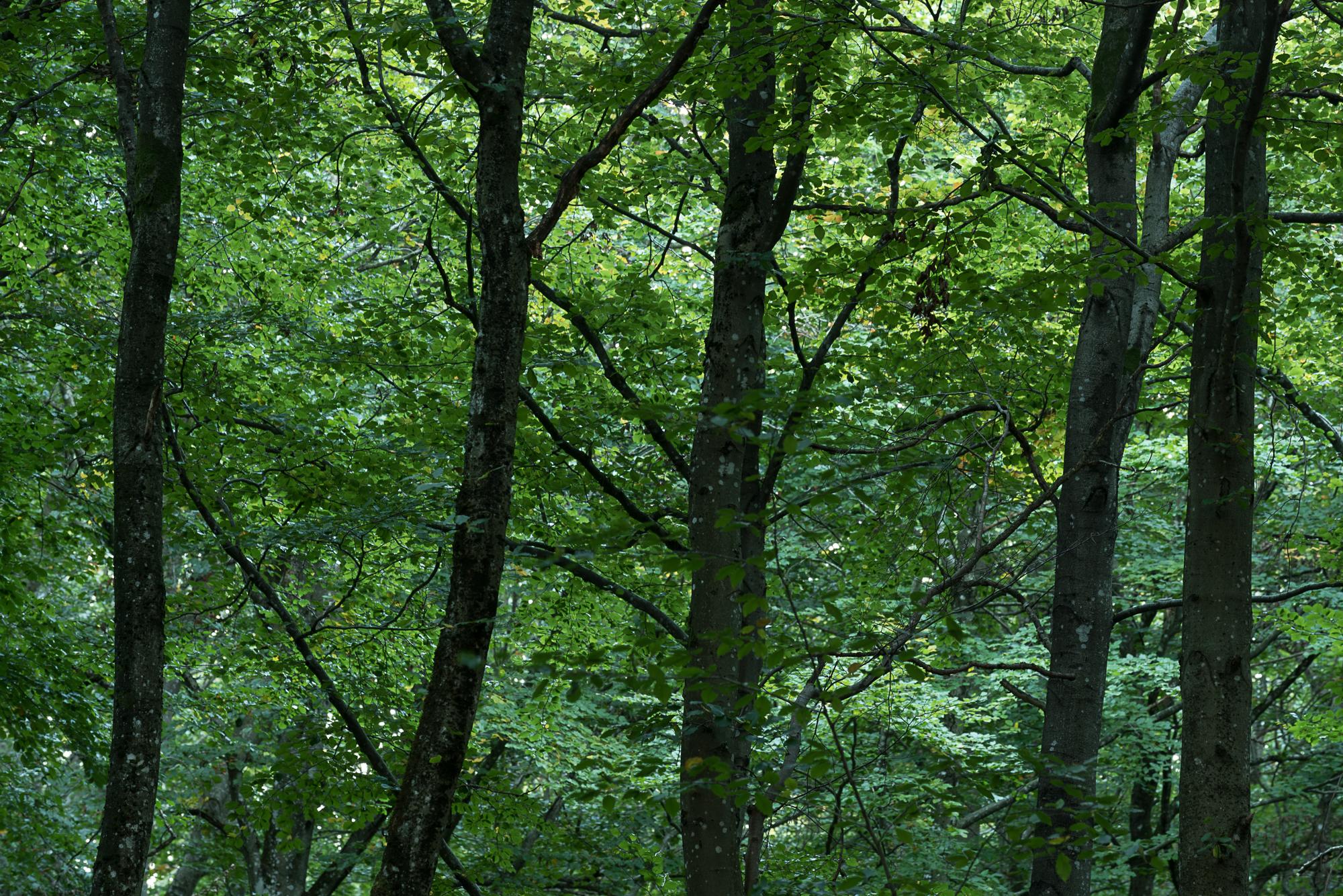 Beecwood, Vestfold-DSC_6131-©Bjørn Joachimsen.jpg