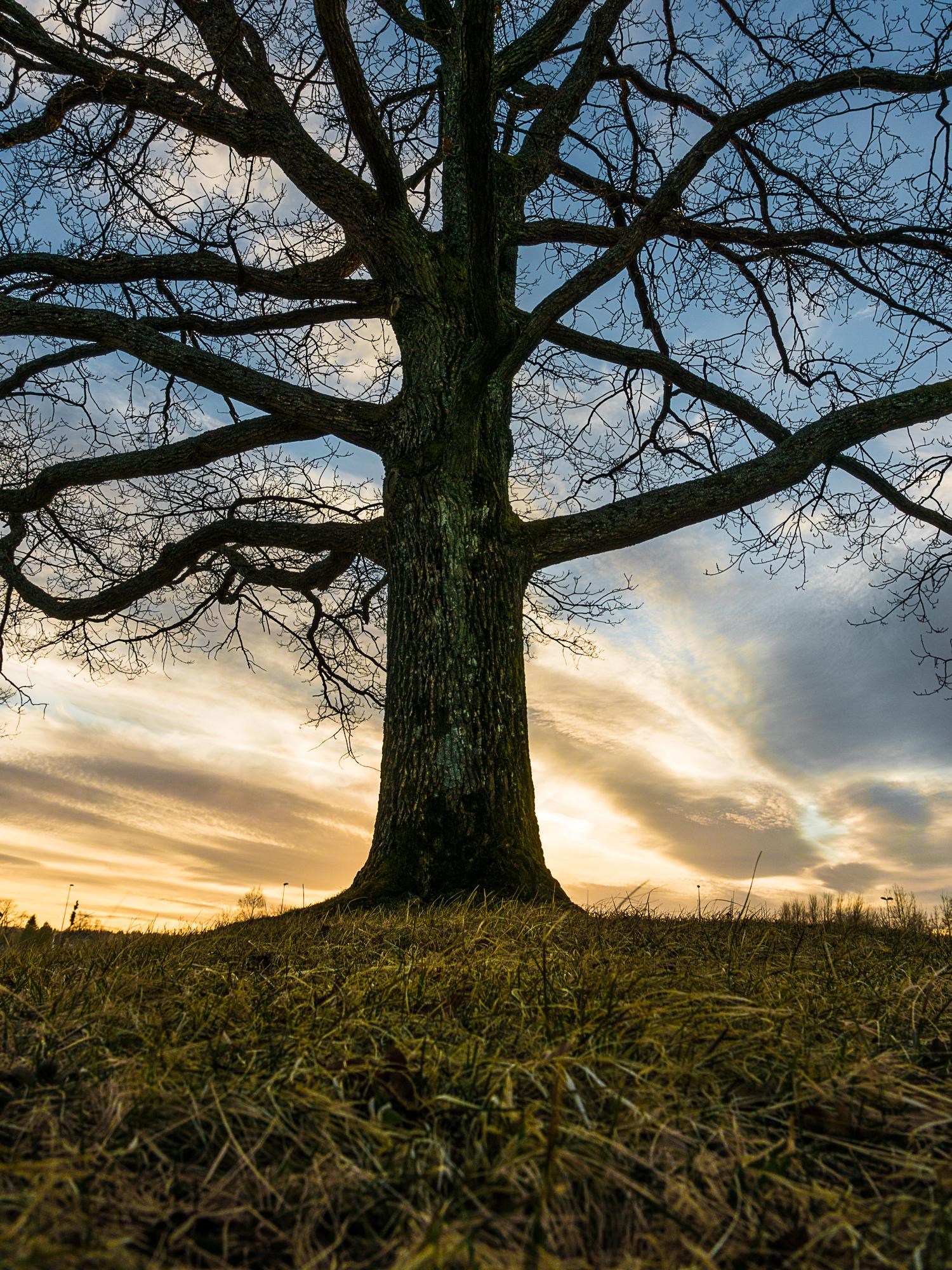 Borreparken, Vestfold-_DSC1448-©Bjørn Joachimsen.jpg