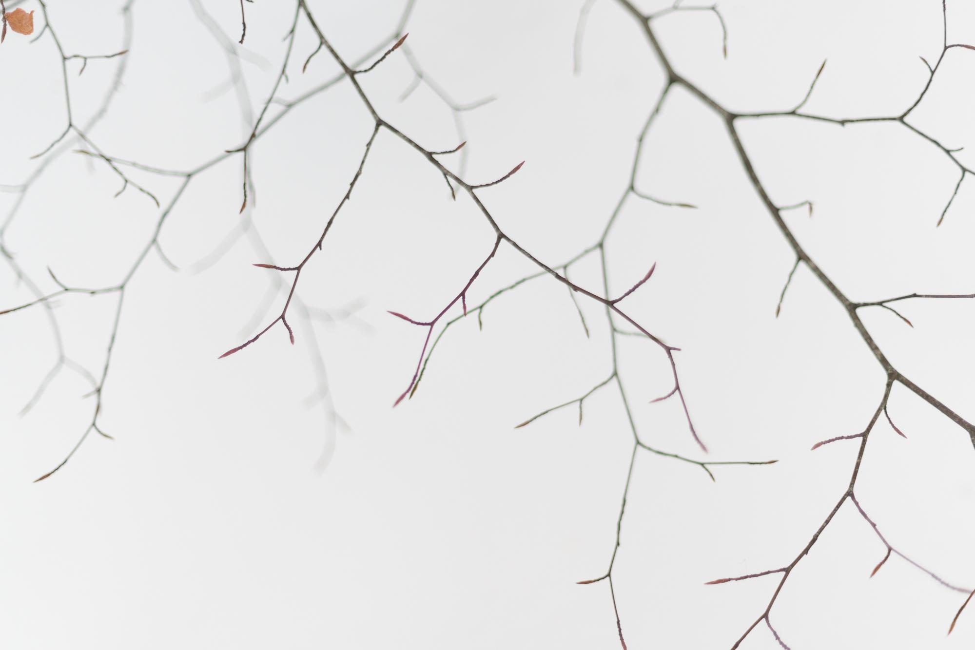 Autumn leaf-_DSC1813.jpg