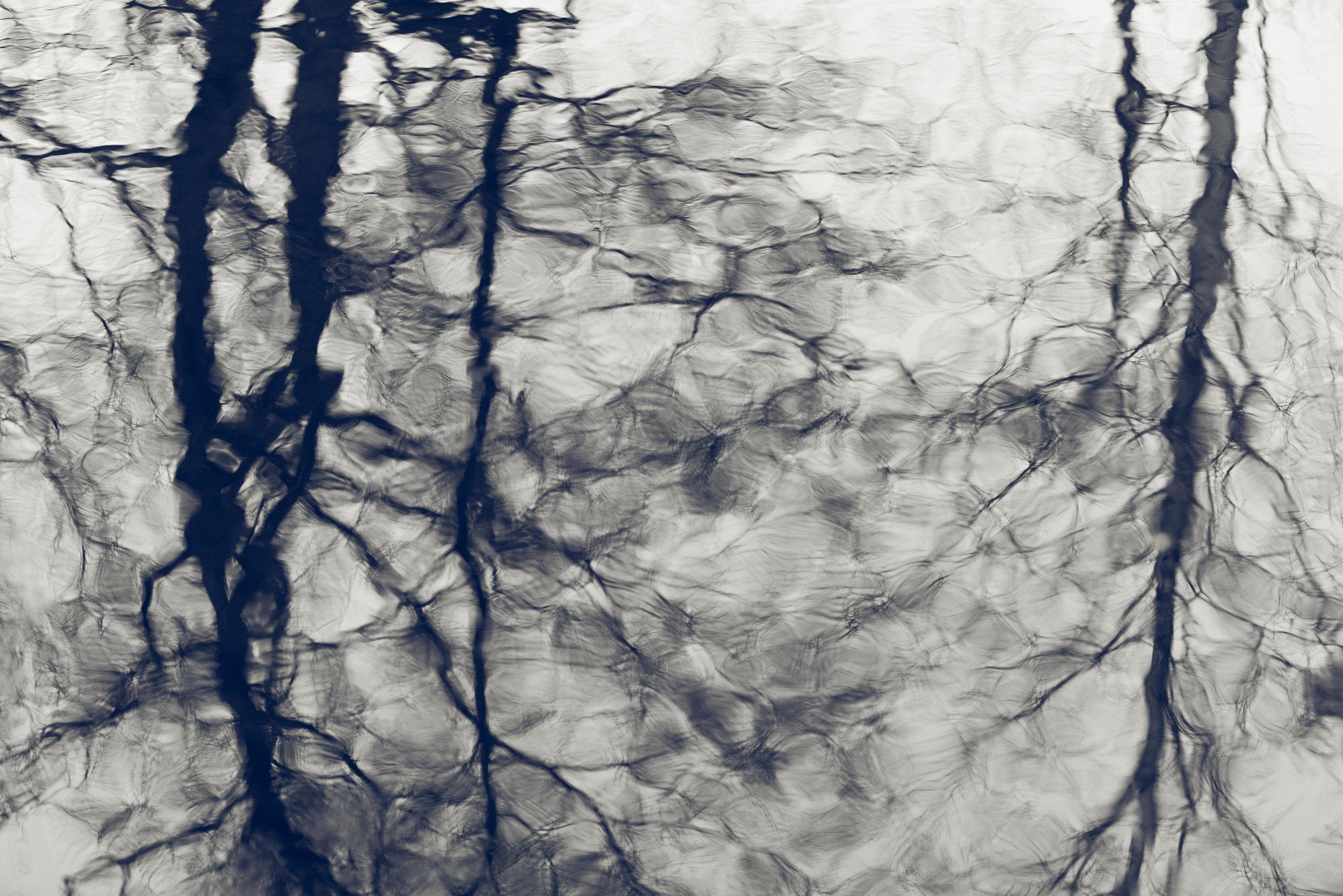 Workshop i kreativ/eksperimentell naturfoto. ©Bjørn Joachimsen.