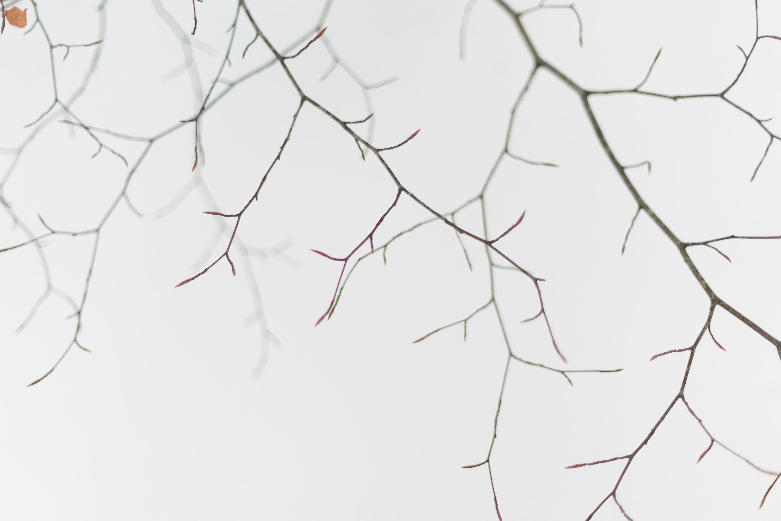 Autumn leaf-_DSC1813-©Bjørn Joachimsen.jpg