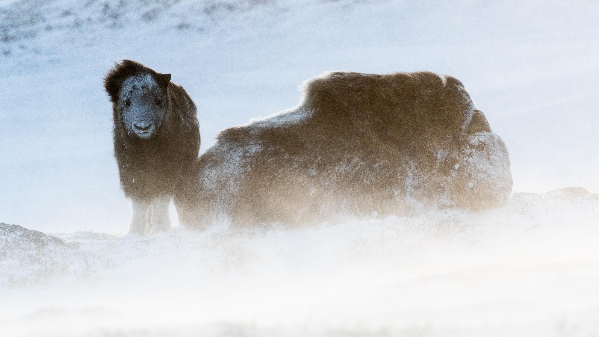 Norway Winter Workshop 2019. ©Bjørn Joachimsen