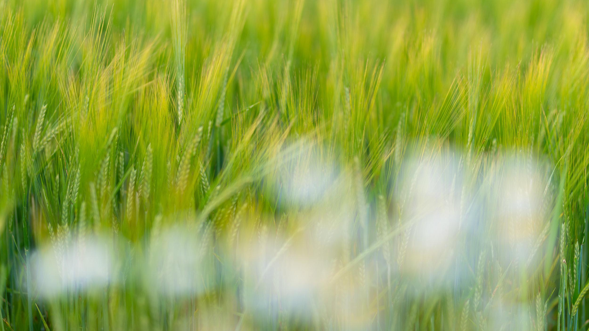 Lær hvordan du kan eksperimentere med uskarphet som virkemiddel innen naturfoto.  ©Bjørn Joachimsen.