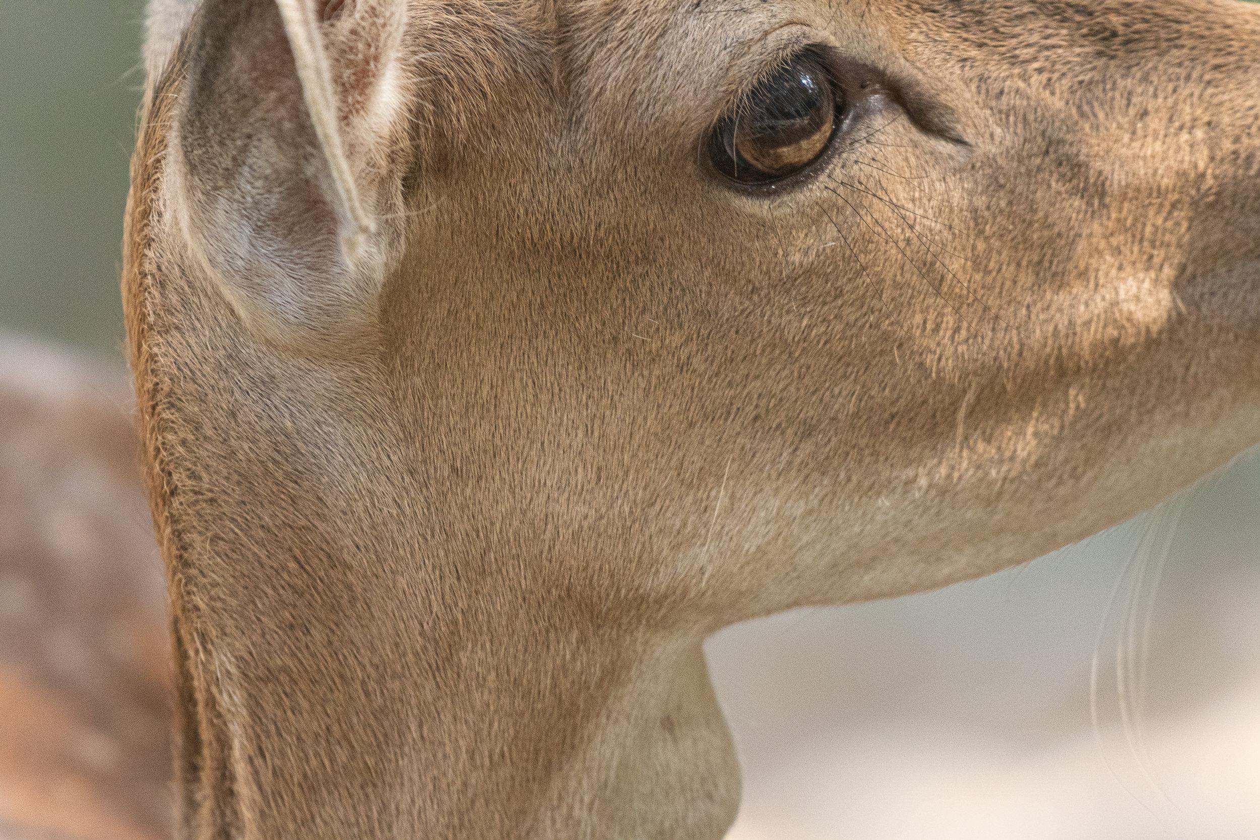 Tangen dyrepark-_DSC5212-©Bjørn Joachimsen.jpg