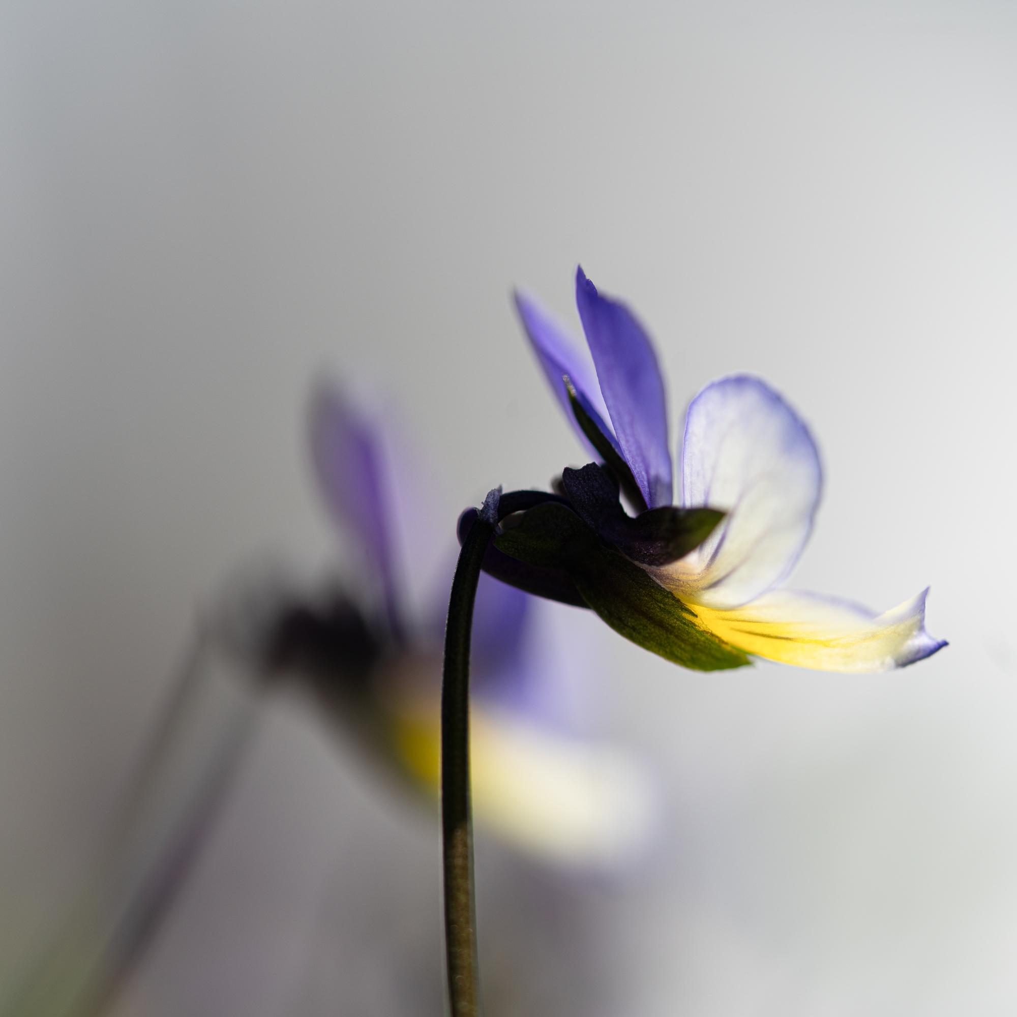 Flower, Nøtterøy-_DSC5089-©Bjørn Joachimsen.jpg