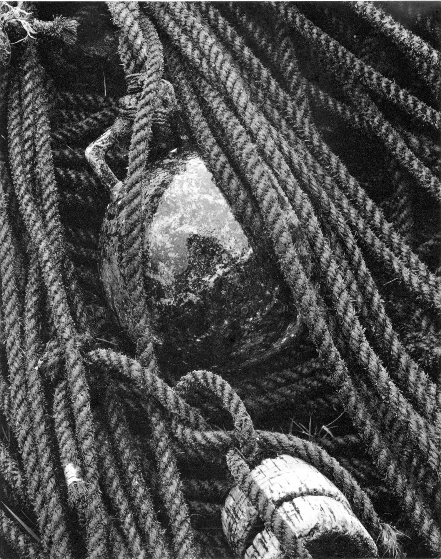 ropes_and_buoy_ps.jpg