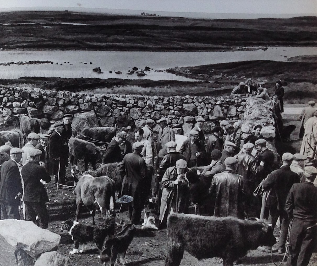 Cattle sale, Loch Ollay. Paul Strand, 1962