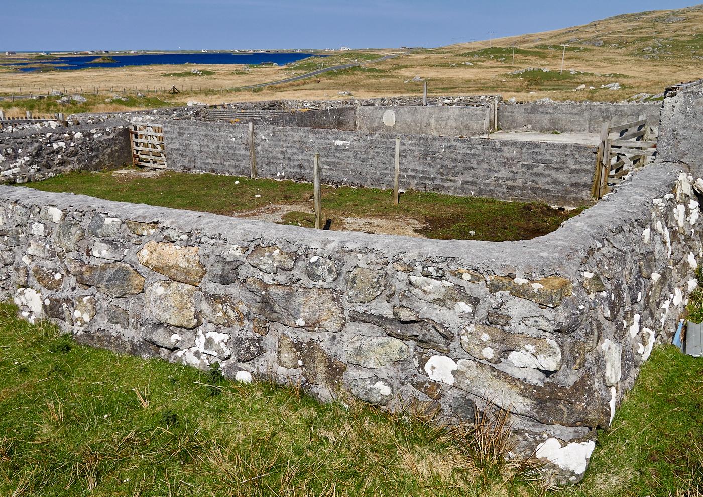 Cattle sale Loch Ollay 3.jpg