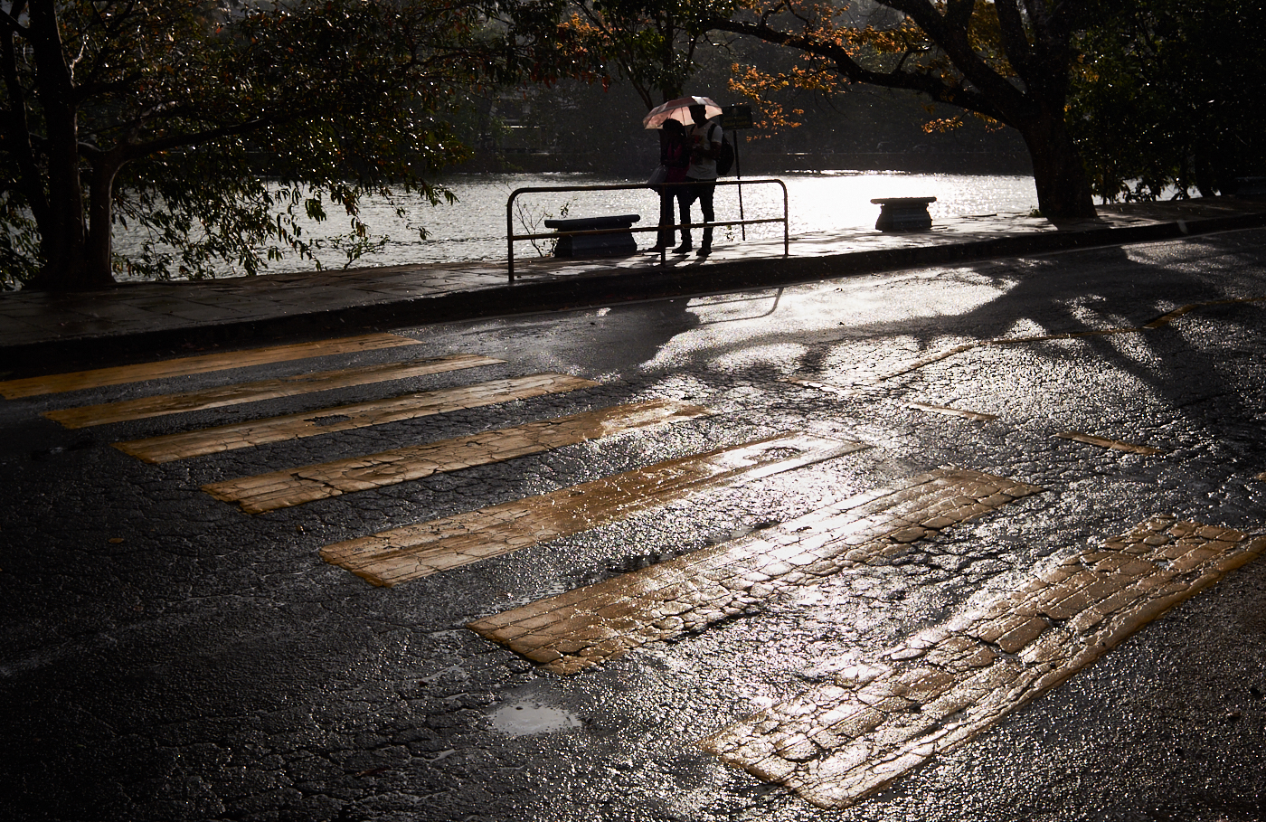 Crossing in the rain.jpg