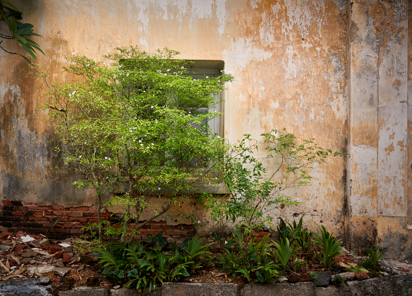 Crumbly walls 2