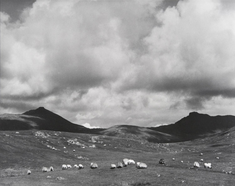 Sheep on the moor. Paul Strand, 1963