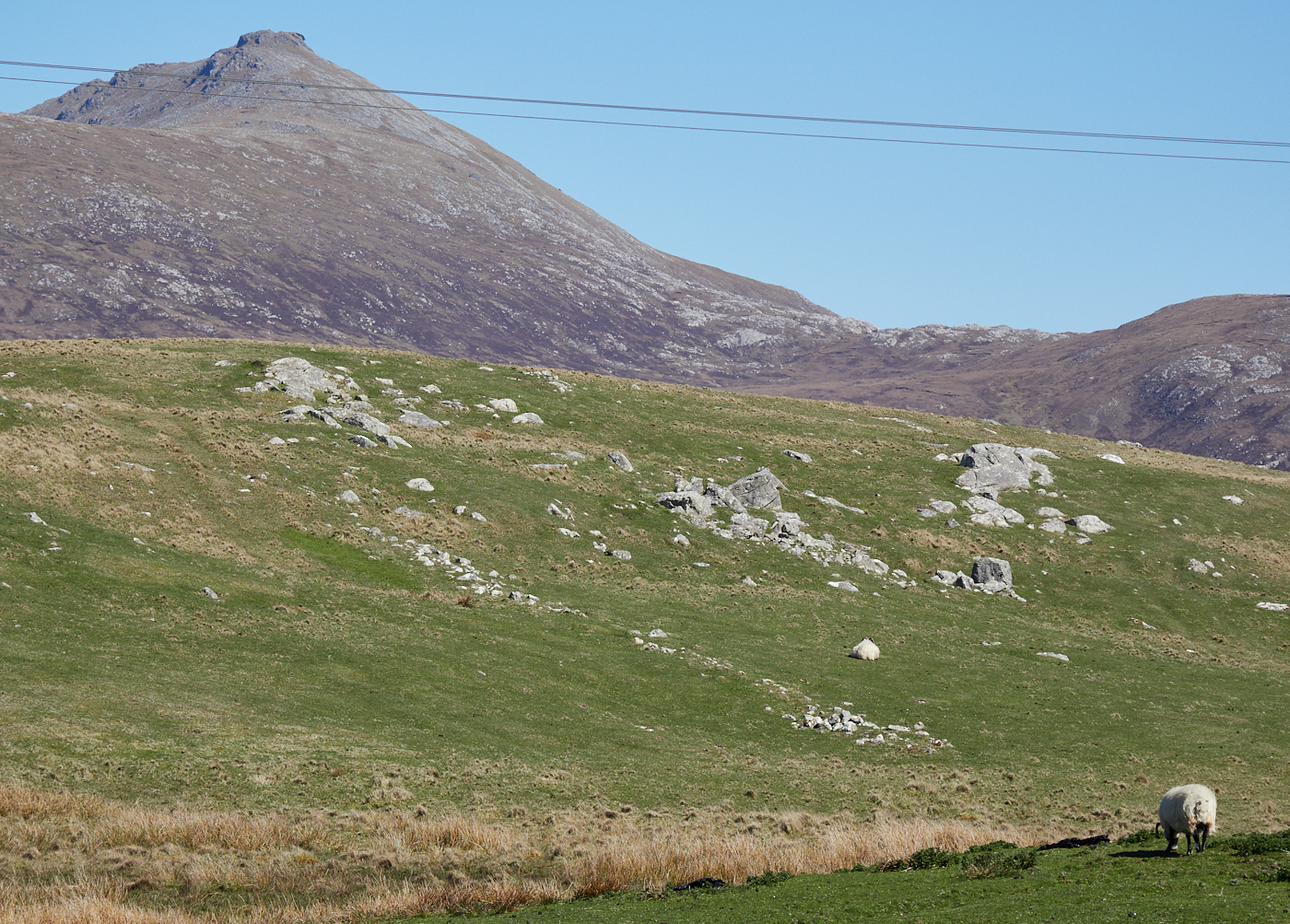 Sheep on the moor MF 4.jpg
