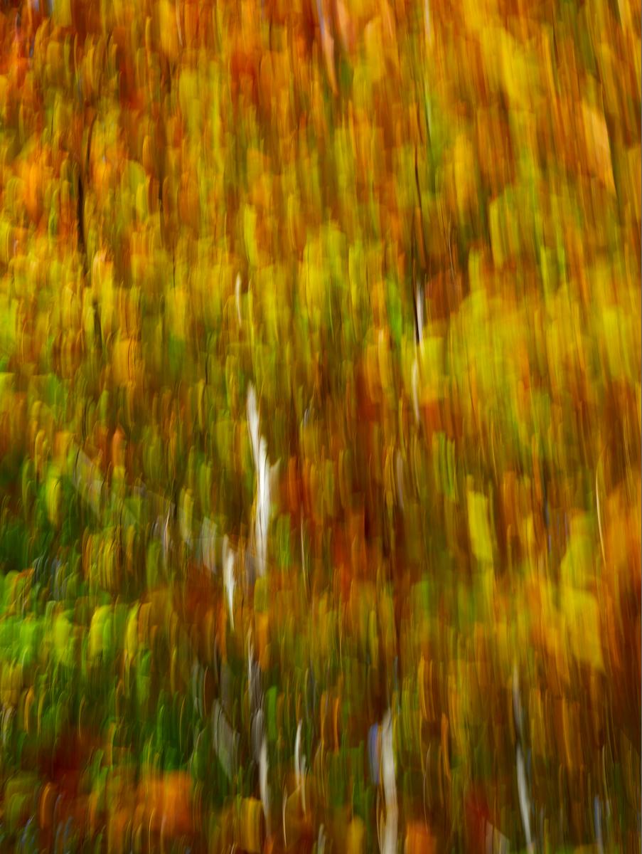 Canadian Fall ICM1600x1200 sRGB 4.jpg