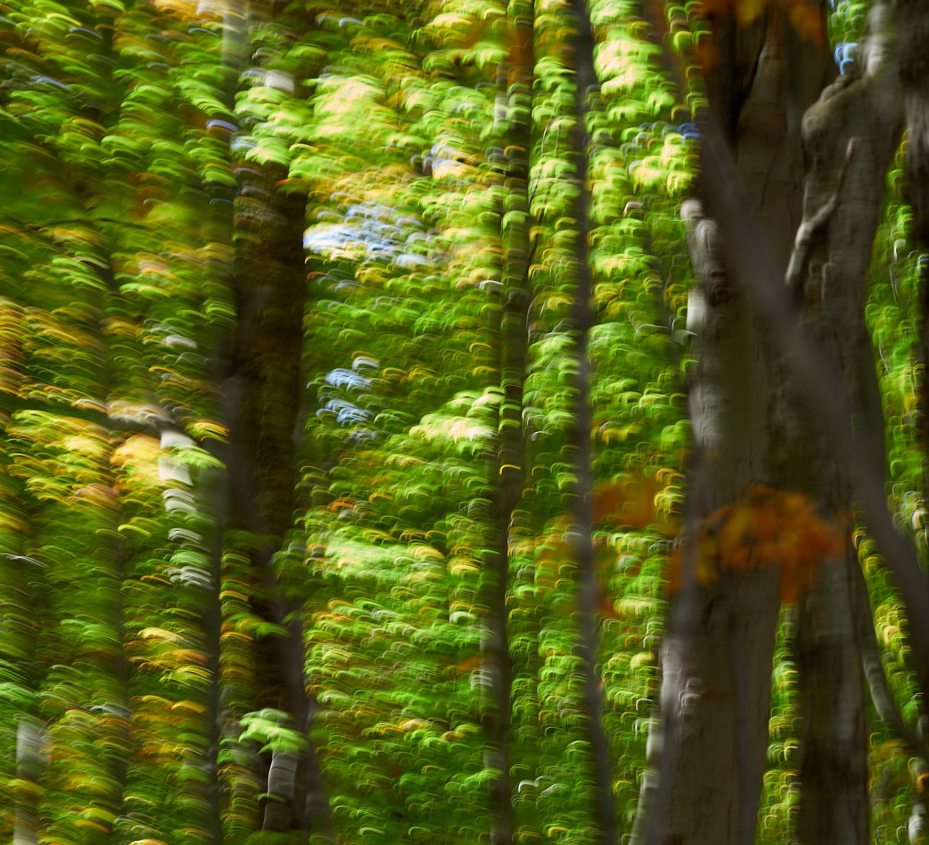 Canadian Fall ICM1600x1200 sRGB 3.jpg