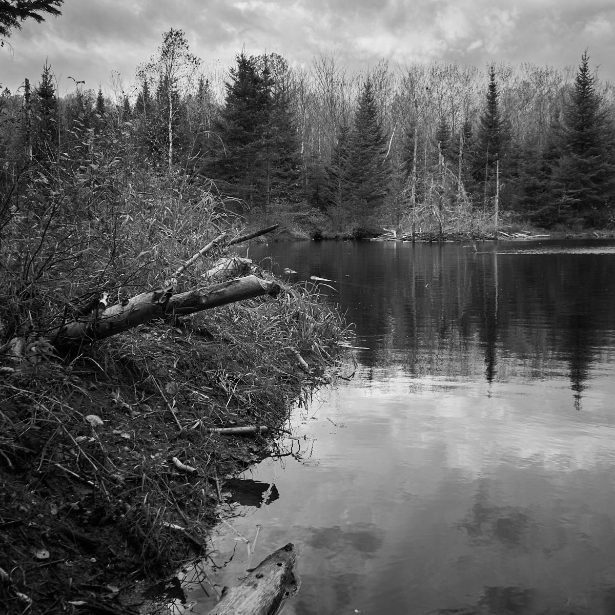 Beaver lodge and dam La Mauricie1600x1200 sRGB.jpg