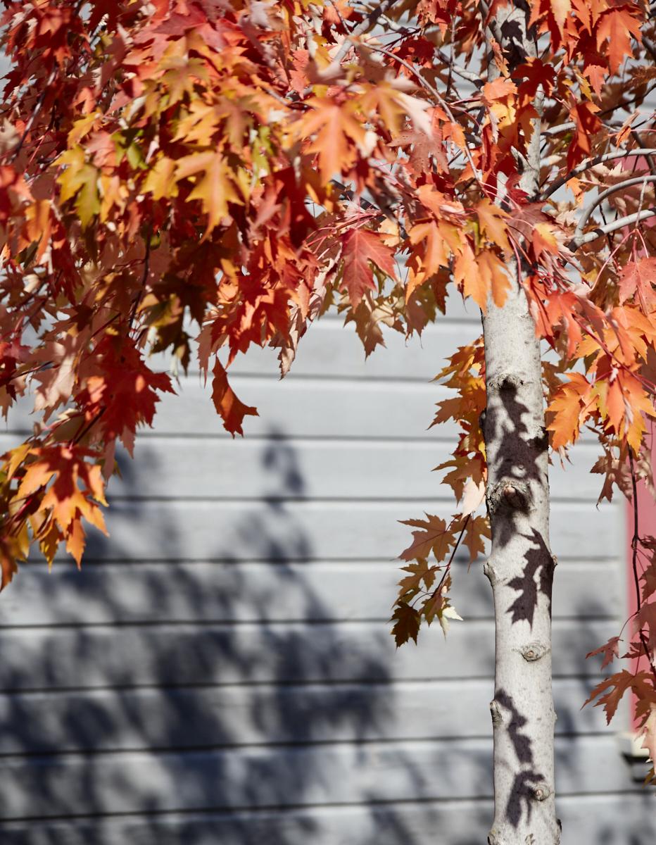 Baie St Paul1600x1200 sRGB 10 (2).jpg