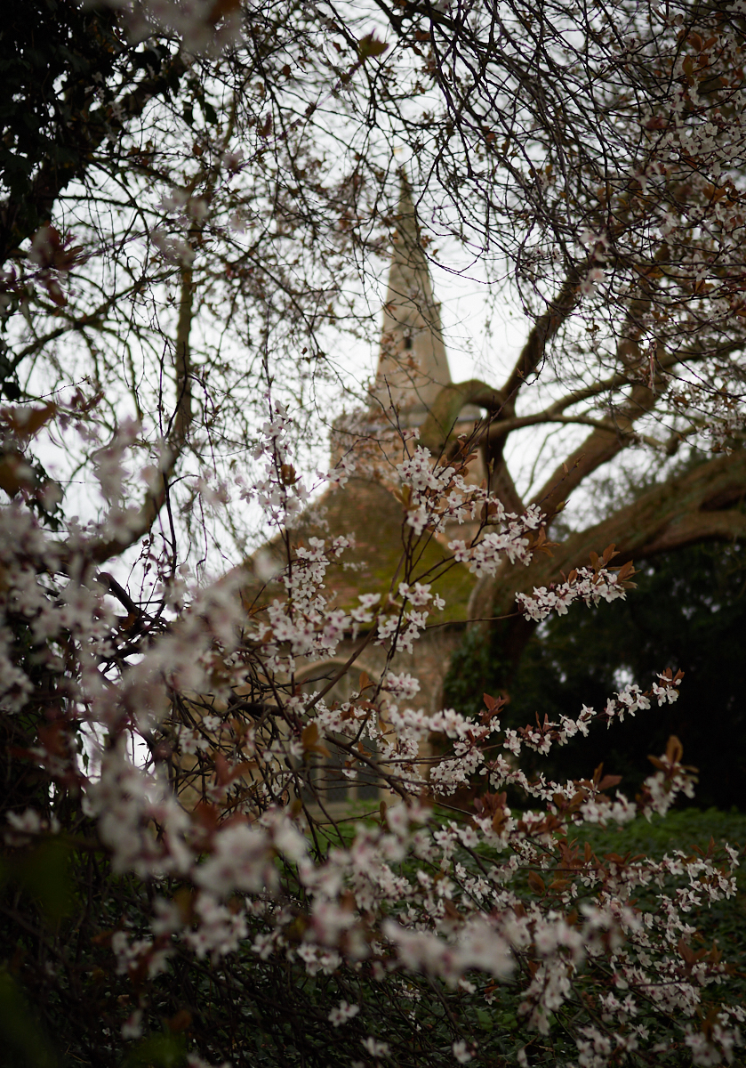 Blossom1600x1200 sRGB.jpg
